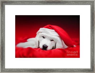 Cute White Puppy Dog In Chrstimas Hat Sleeping In Red Satin Framed Print by Michal Bednarek