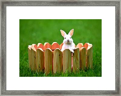 Cute White Rabbit  Framed Print by Lanjee Chee