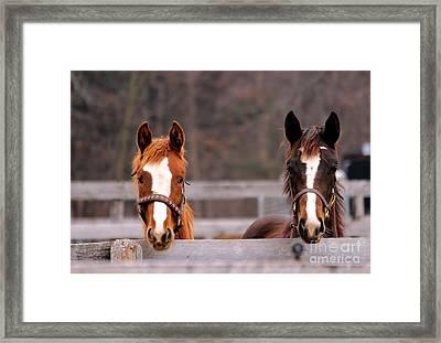 Cute Yearlings Framed Print