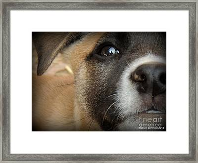 Cuteness Abounds Framed Print