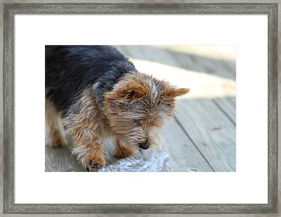 Cutest Dog Ever - Animal - 011313 Framed Print by DC Photographer