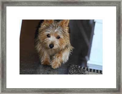 Cutest Dog Ever - Animal - 011322 Framed Print by DC Photographer