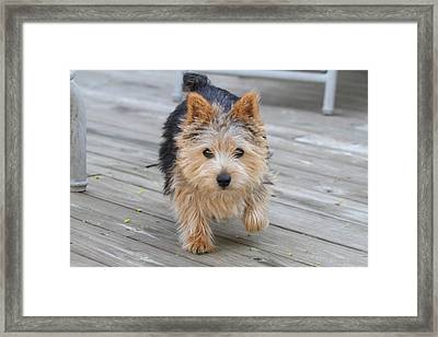 Cutest Dog Ever - Animal - 011326 Framed Print by DC Photographer