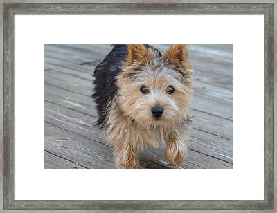 Cutest Dog Ever - Animal - 011327 Framed Print by DC Photographer