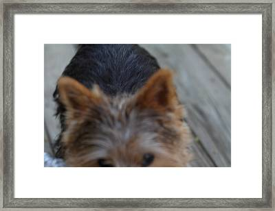 Cutest Dog Ever - Animal - 01133 Framed Print by DC Photographer