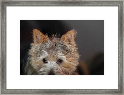 Cutest Dog Ever - Animal - 011332 Framed Print by DC Photographer