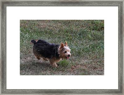 Cutest Dog Ever - Animal - 011345 Framed Print by DC Photographer