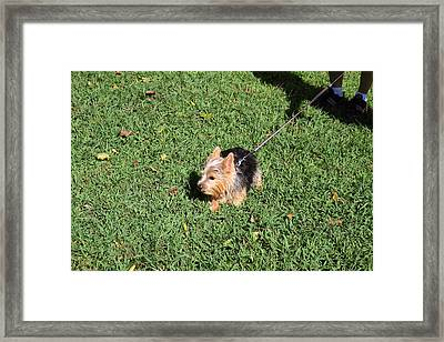 Cutest Dog Ever - Animal - 011349 Framed Print by DC Photographer