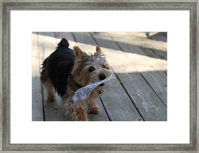Cutest Dog Ever - Animal - 01135 Framed Print by DC Photographer