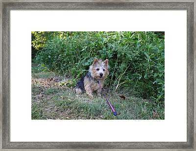 Cutest Dog Ever - Animal - 011350 Framed Print by DC Photographer