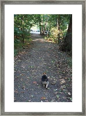 Cutest Dog Ever - Animal - 011353 Framed Print by DC Photographer