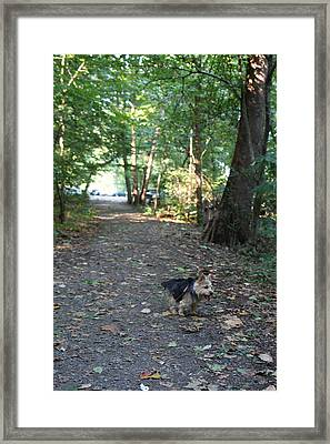Cutest Dog Ever - Animal - 011355 Framed Print by DC Photographer