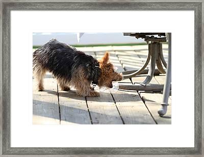 Cutest Dog Ever - Animal - 01137 Framed Print by DC Photographer