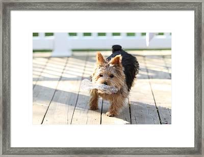 Cutest Dog Ever - Animal - 01138 Framed Print by DC Photographer