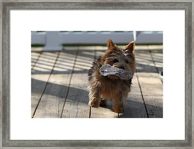 Cutest Dog Ever - Animal - 01139 Framed Print by DC Photographer