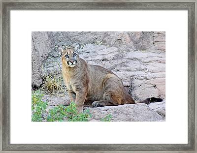 Framed Print featuring the photograph Cutie Pie by Elaine Malott