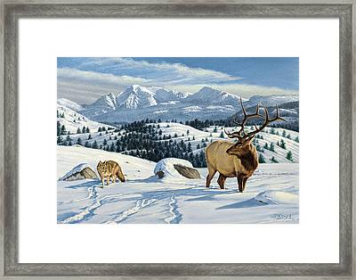 Cutoff Mountain -  Elk And Coyote   Framed Print by Paul Krapf