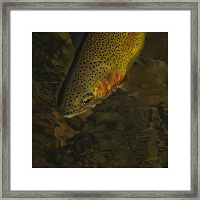 Cuttbow Framed Print