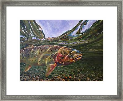 Cutthroat Hooked In The Ripple Framed Print