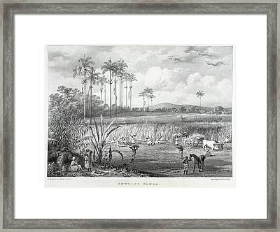 Cutting Canes Framed Print by British Library