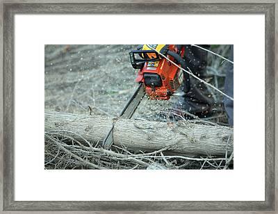 Cutting Firewood Framed Print
