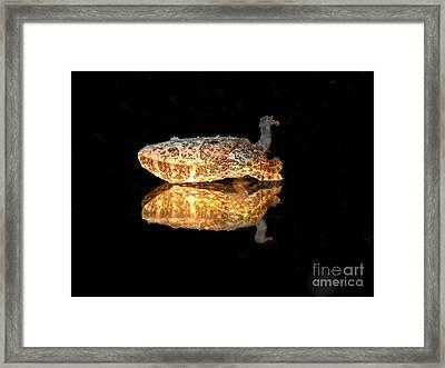 Cuttle Fish Reflections Framed Print by Soren Egeberg
