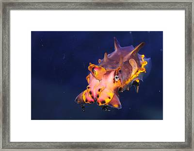Cuttlefish Framed Print by Kristi Schmit