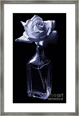 Cyan Beauty Framed Print