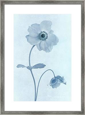 Cyanotype Windflowers Framed Print by John Edwards