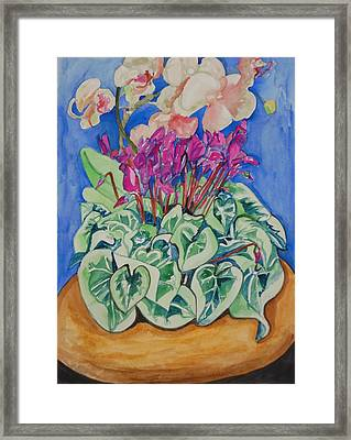 Cyclamen And Orchids In A Flower Pot Framed Print