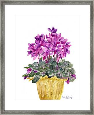 Cyclamen Framed Print by Neela Pushparaj