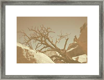 Cycle Of Life 3 Framed Print