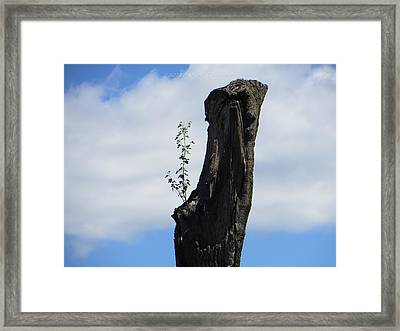 Cycle Of Life Framed Print by Sonali Gangane