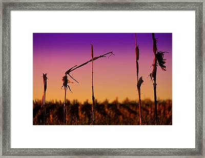 Cycles Framed Print by Mary Burr