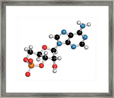 Cyclic Adenosine Monophosphate Molecule Framed Print by Molekuul