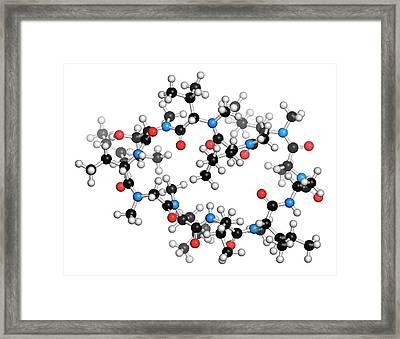 Cyclosporine Immunosuppressant Drug Framed Print