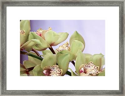Cymbidium Orchids  Framed Print by Ann Murphy