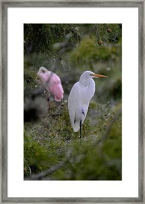 Cypres Landing Framed Print by Janal Koenig