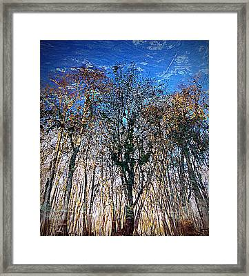Cypress Abstract 1 Framed Print by Sheri McLeroy