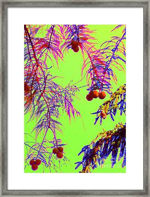 Cypress  Framed Print by Ann Johndro-Collins