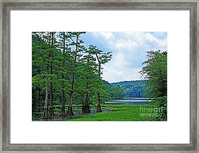 Cypress At Beavers Bend Framed Print
