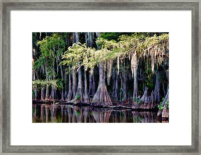 Cypress Bank Framed Print