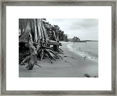 Cypress Bay Framed Print