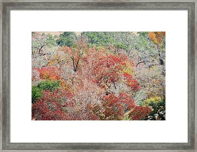Framed Print featuring the photograph Cypress Beauty by David  Norman