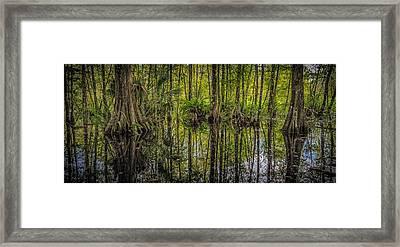 Cypress Framed Print by Bill Martin
