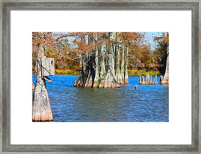 Cypress Birdhouse  Framed Print
