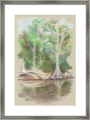 Cypress By The Waccamaw River Framed Print by MM Anderson
