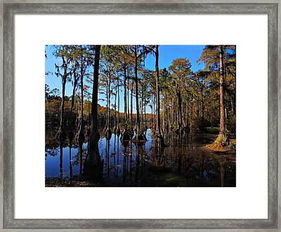 Cypress Colors Framed Print by Laura Ragland