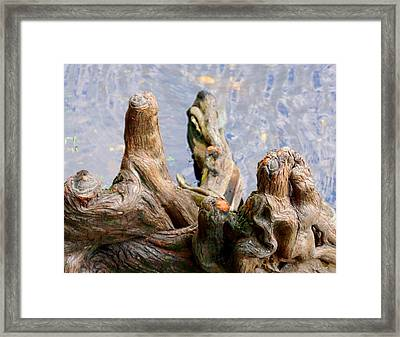 Cypress Domes Framed Print