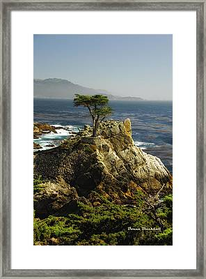 Cypress Framed Print